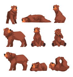 Cute brown bear collection wild forest animal vector