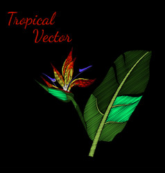 Embroidery tropical vector