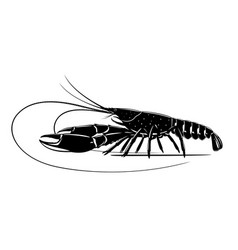 Red claw crayfish black and white vector