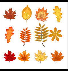 set of colorful autumn leaves and berries vector image