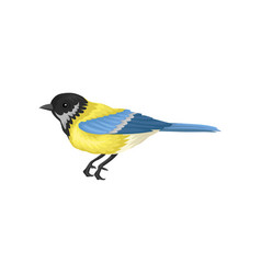 Tomtit with bright yellow and blue feathers small vector