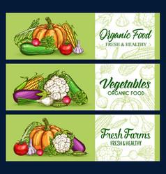 vegetables veggies sketch banners farm food vector image