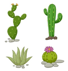 Collection of cactus vector image