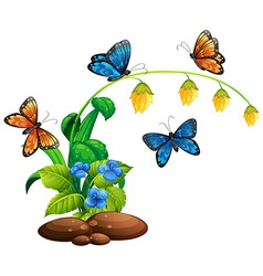 Butterflies flying around the plant vector image
