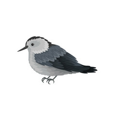 Flat icon of white-breasted nuthatch vector