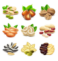 Nuts icons set vector