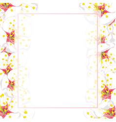 White plum blossom flower banner card border vector