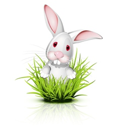 little rabbit grass vector image vector image