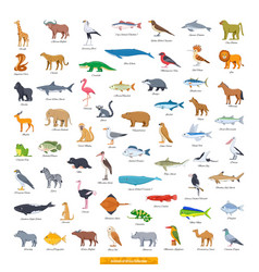 Animals africa collection vector