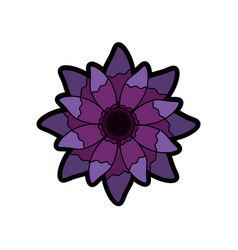 beauty violet flower floral natural petal vector image