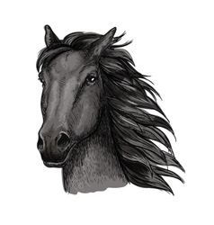 Black proud running horse portrait vector image