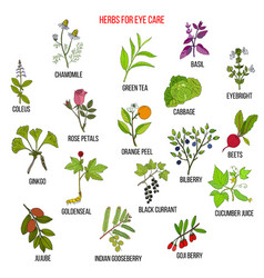 Best medicinal herbs for eyes care vector