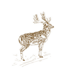 deer with branchy horns in sketch style hand vector image