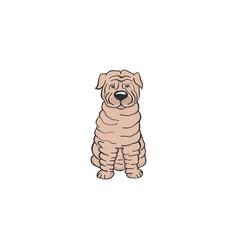 sharpey cartoon dog icon vector image