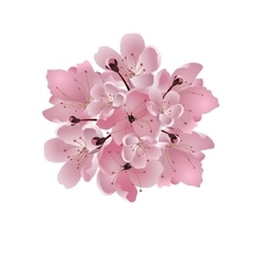 Japanese cherry bouquet of pink cherry blossom vector