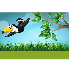 Scene with toucan flying in the field vector image vector image