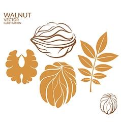 Walnut Set vector image vector image