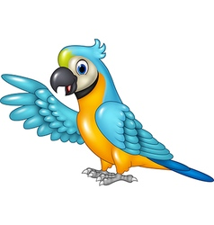 Cartoon funny macaw presenting isolated vector image vector image