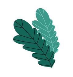leaves foliage nature botanical isolated design vector image