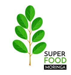 Moringa icon vector