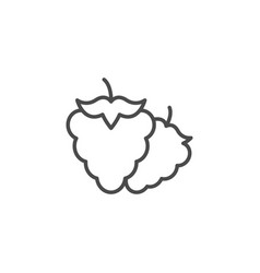 raspberry line outline icon fruit concept vector image