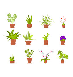 Set green house plants in pots vector