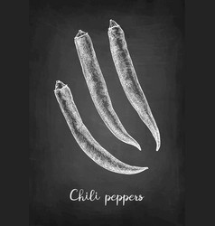chalk sketch chile peppers vector image