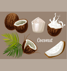 Coconut palm fruits coco nut milk splash vector