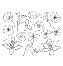 Contoured simple different flowers set vector
