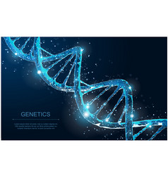 dna abstract 3d polygonal wireframe molecule vector image