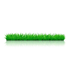 Picture grass side01 vector