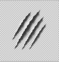 scratch claw tiger slash mark from claw vector image