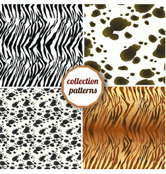 set of seamless patterns of tiger skins zebra vector image