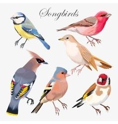 Set of songbirds vector