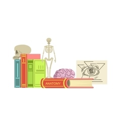 Anatomy Class Set Of Objects vector image vector image