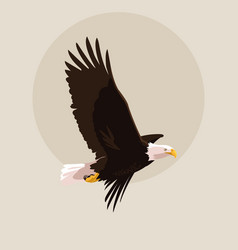 bald eagle bird flying vector image