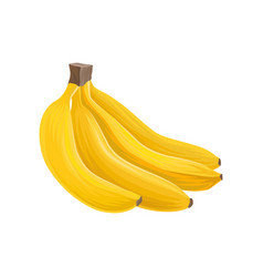 cartoon icon of four sweet bananas healthy eating vector image