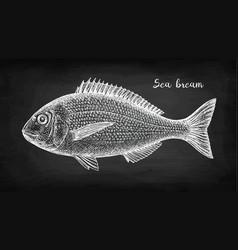 Chalk sketch gilt-head sea bream fish vector