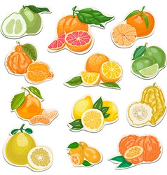Citrus collection on tags vector image