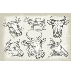 Collection of hand-drawn cows vector
