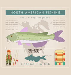 channel catfish vector image