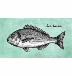 Ink sketch of gilt-head sea bream vector