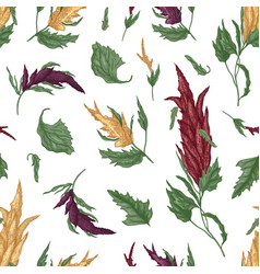 natural seamless pattern with quinoa or amaranth vector image