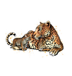 Portrait a leopard from a splash watercolor vector