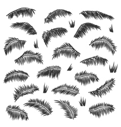 silhouette palm leaves set isolated vector image