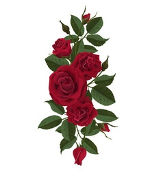 Red roses flowers buds and leaves vector image vector image