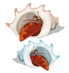 Red lobster peeking out of shell isolated vector image vector image