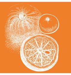 Hand drawn orange citrus in vector image vector image