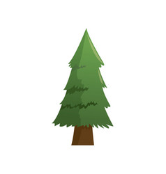 cartoon pine tree natural plant conifer image vector image