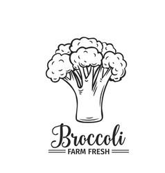 hand drawn broccoli icon vector image vector image